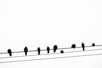 Silhouette of Pigeons Perching on a Telegraph Wire in Bangkok, Thailand
