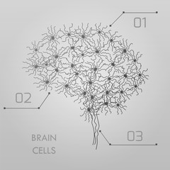 brain cells connectome