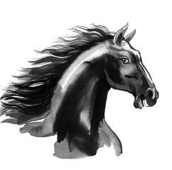 Black horse sketch