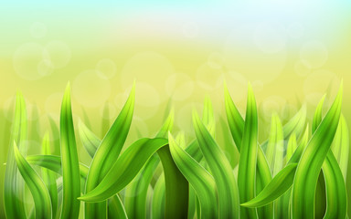 Realistic vector green grass background. Country landscape or meadow. Detailed leaves of the plant to the label on the environment and nature.