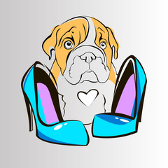 bulldog english dog breed portrait illustration
