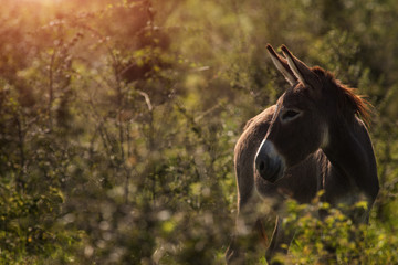 Donkey in a tall grass