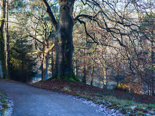 English park in winter morning: icy road, snow on the grass, trees, selective focus
