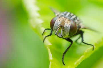 a fly on green flower leaf .