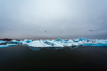 Icebergs and birds flying