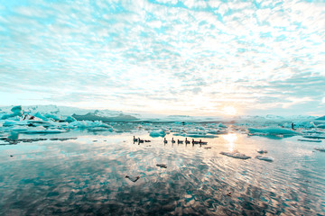 Birds floating on ice sea at sunset