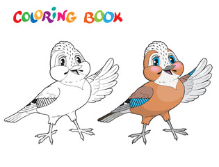 Coloring book jay bird - isolated vector illustration.