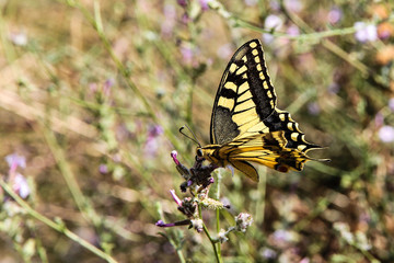 Kalabrien - Schmetterling in Civita