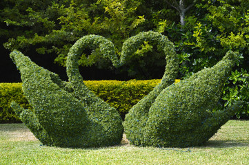 Topiary swans love heart