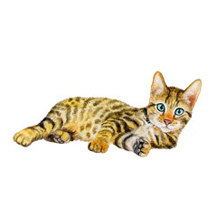 Watercolor portrait of serengeti cat with dots, stripes isolated on white background. Hand drawn detailed sweet home pet. Bright colors, realistic design. Greeting card design. Clip art. Add your text