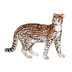 Watercolor portrait of ocelot cat with dots, stripes isolated on white background. Hand drawn detailed sweet home pet. Bright colors, realistic design. Greeting card design. Clip art. Add text