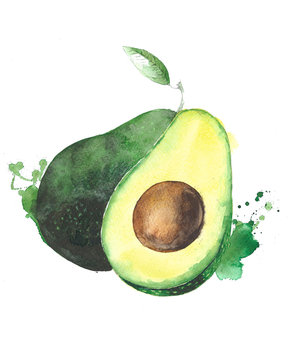 Avocado fruit watercolor food illustration isolated on white background