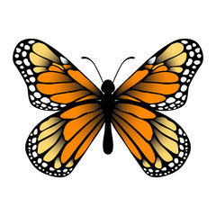 monarch butterfly eps vector on isolated white background.