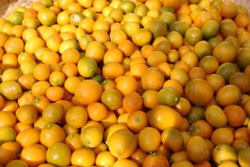 金柑の収穫