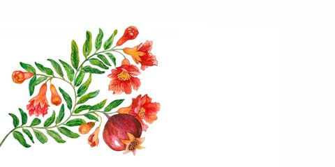 Flowers and fruit of a pomegranate. Watercolor.