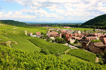 Vineyards around Kaysersberg, a small village in the heart of the Alsace Wine Route, France