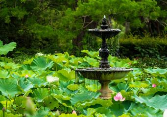 Lotus Fountain. Fountain in a peaceful lotus pond, Royal Botanic Garden, Sydney.