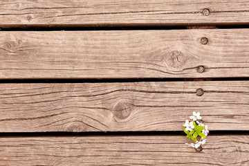 spring fruit flowers on wooden board. spring background.