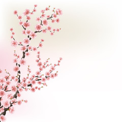 Blooming Cherry Blossom Branches card. EPS 10