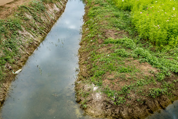 Irrigation canal with plants