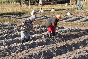 two woman farmer holding spade at field in nakhon phanom,Thailan