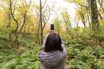 Back view of woman taking photo at forest