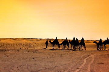 Camel in Sahara Desert during sunset