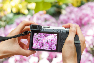 Hand holding camera taking photograph of orchids flowers