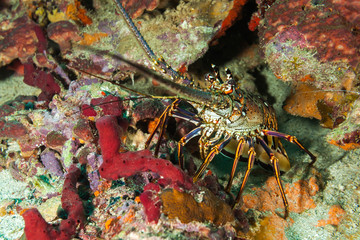 Crab on sea bed