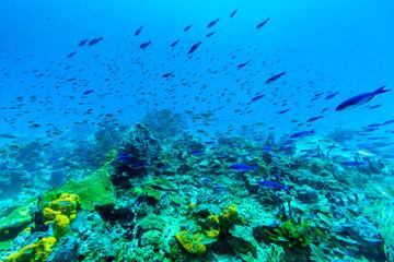 Fish on sea bed