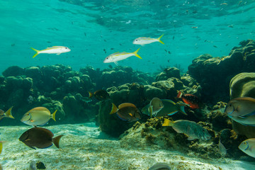 Tropical fish and sea bed