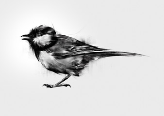 isolated painted bird tit