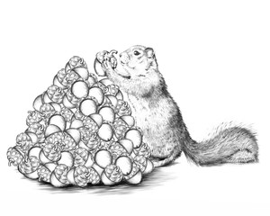 A squirrel places one more nut on a pile of acorns. B&W sketch drawing.