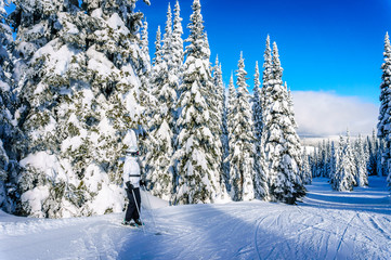 Wall Mural - Senior Woman enjoying the Winter Landscape with Snow Covered Trees on the Ski Hills near the village of Sun Peaks in central British Columbia, Canada