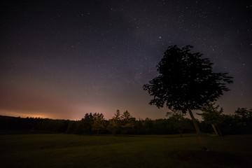 Silhouette Tree with Night Sky