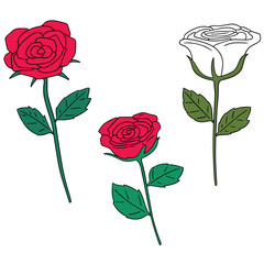 vector set of rose