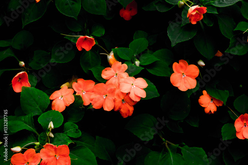 Art And Black Ground Small Orange Flowers Pretty Stock Photo And