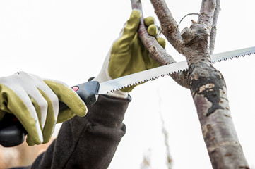 sawing the tree branches