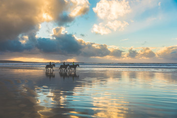 Horses walking on the beach at sunset