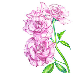 Flowers roses pencil illustration. Manual composition. Wedding card