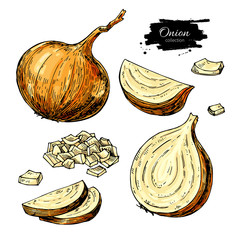 Onion hand drawn vector set. Full, half and cutout slice. Isolated Vegetable artistic style object.