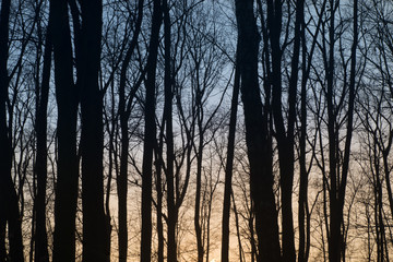 trees silhouettes against sunset sky