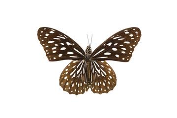 бабочка, коллекция бабочек на белом фоне изолированных