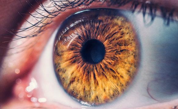 Macro pupil retina human colse eye photo