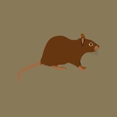 Vector illustration in flat style rat