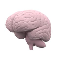 Human Brain, 3D Model