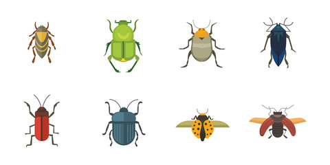 Set of insects flat style vector design icons. Collection nature beetle and zoology cartoon illustration
