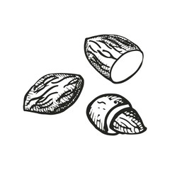 almonds drawing. vector illustration