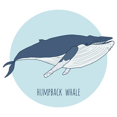 Humpback whale vector illustration. Hand drawn, isolated on white and blue background. Sea animals for creative design.