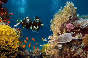 The loving couple dives among corals and fishes in the ocean Wall mural